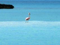Fowl Cay, The Exumas 084