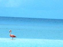 Fowl Cay, The Exumas 088